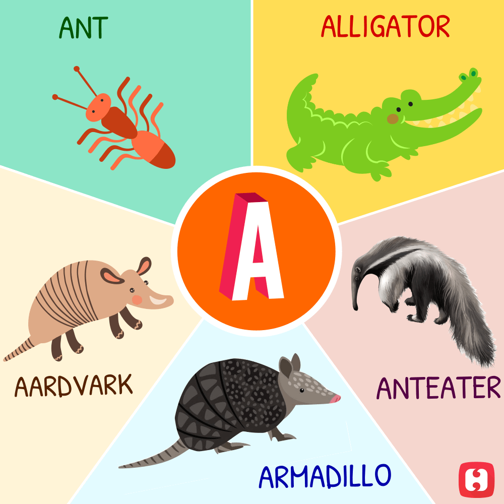 Animal and Bird Names (A to Z)